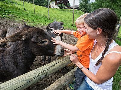 Wildtierpark Assling ©Fun Alpin Osttirol Sommerrodelbahn GmbH (TVB Osttirol)